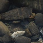 insect on the Pistol River
