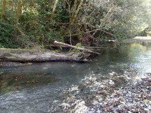fallen logs as Euchre