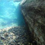 underwater tree at Euchre