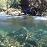 underwater at Euchre