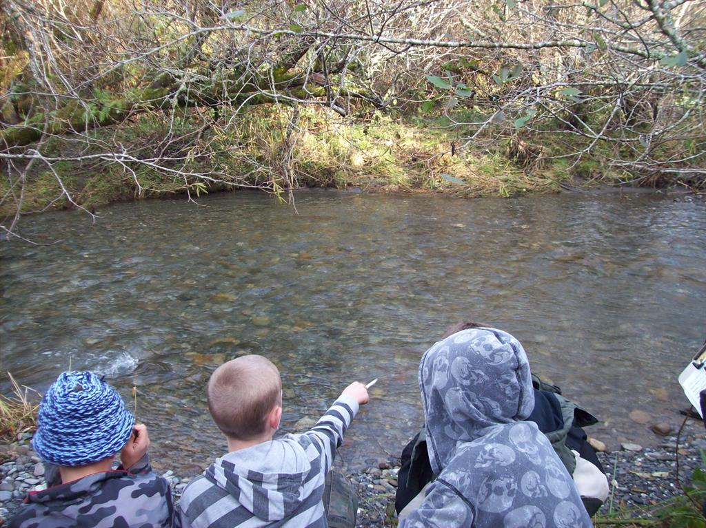 children looking for salmon