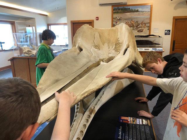 Children examining whale skull