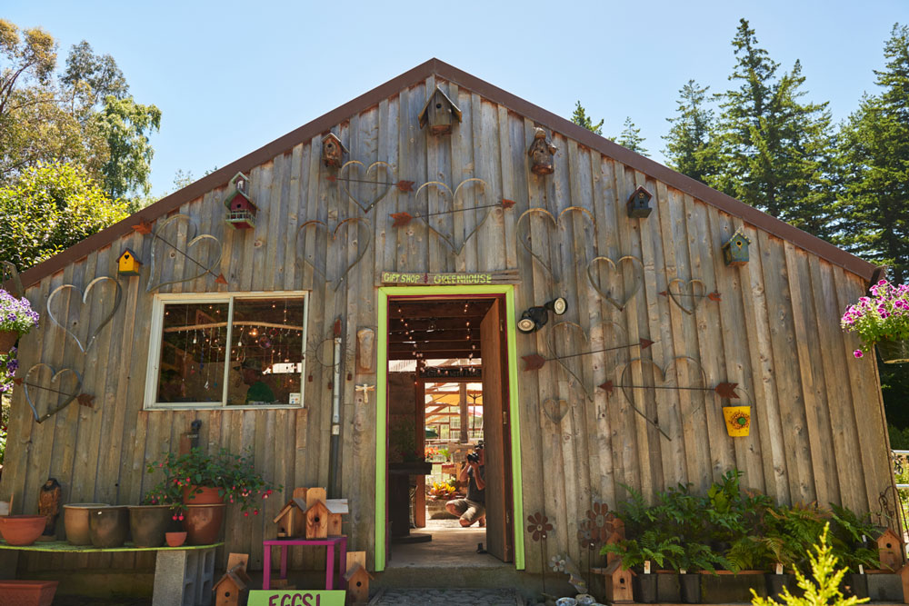 Dragonfly farms store