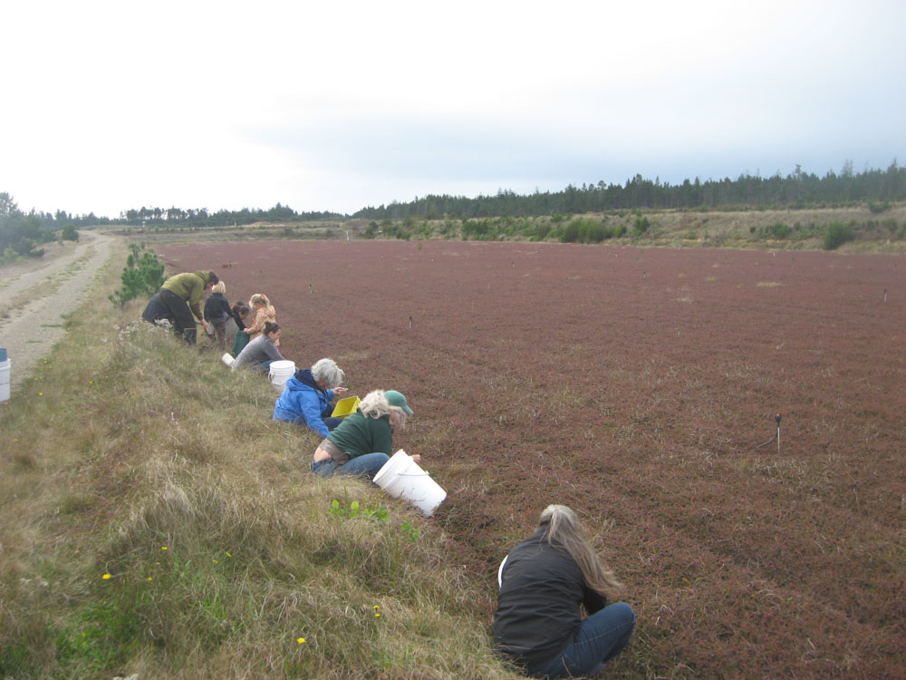 Cranberry-gleaning-cwp-website-1