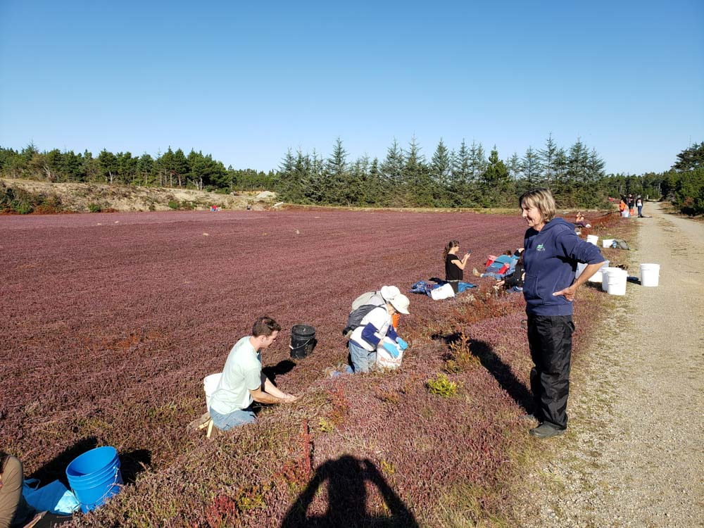 Cranberry-gleaning-cwp-website-2