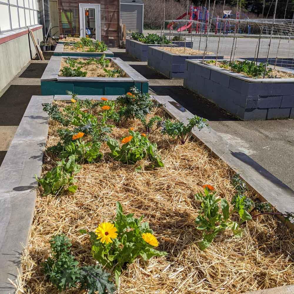 School-Garden-WEB-cwp-website-1