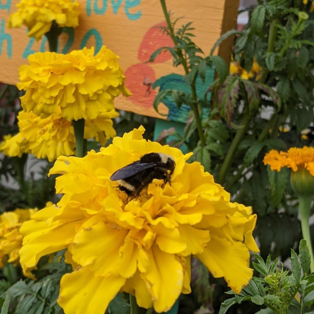 School-Garden-WEB-cwp-website-10
