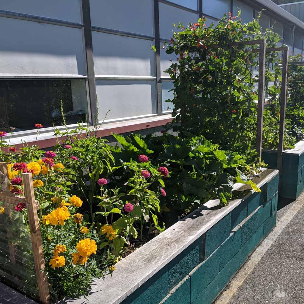 School-Garden-WEB-cwp-website-5