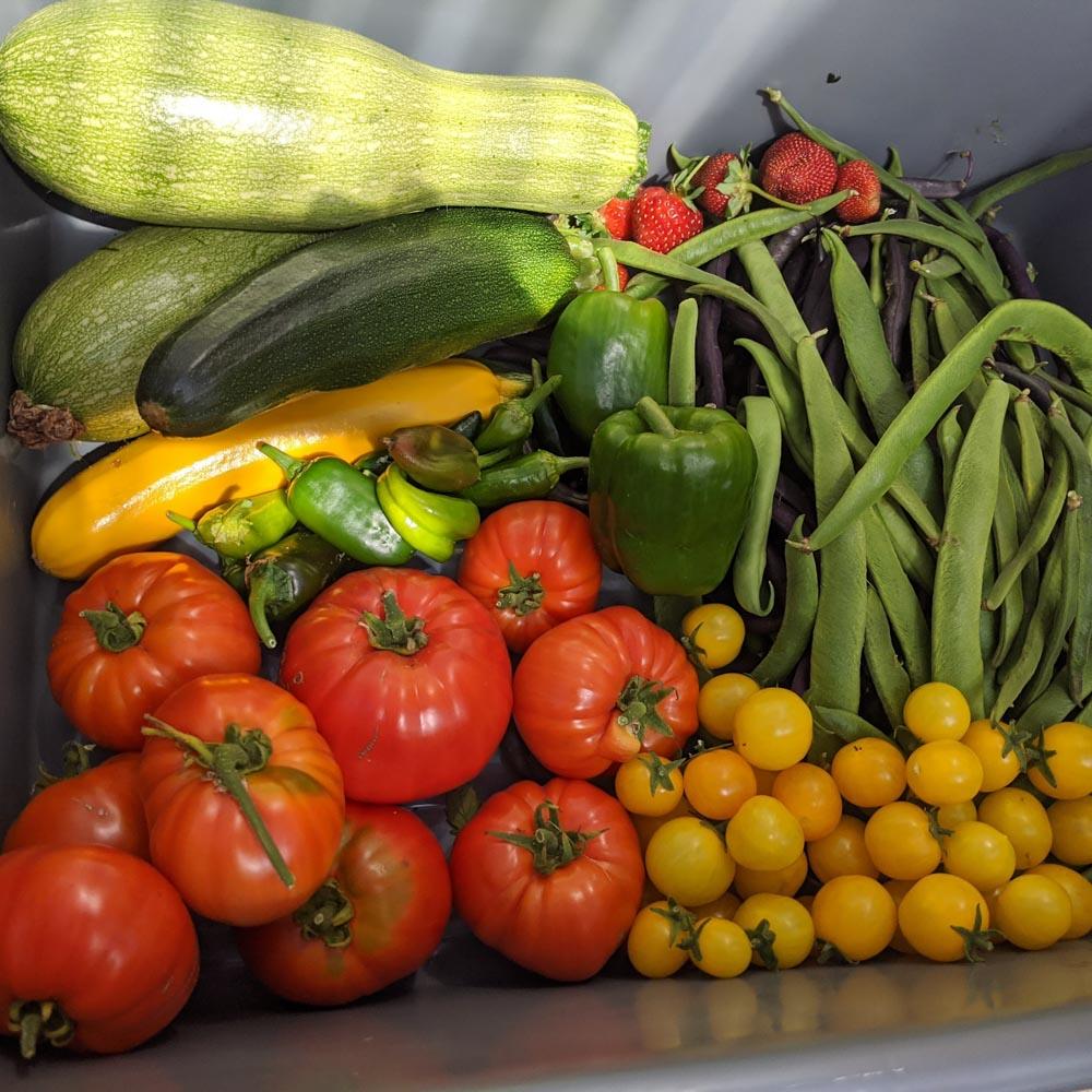 School-Garden-WEB-cwp-website-7