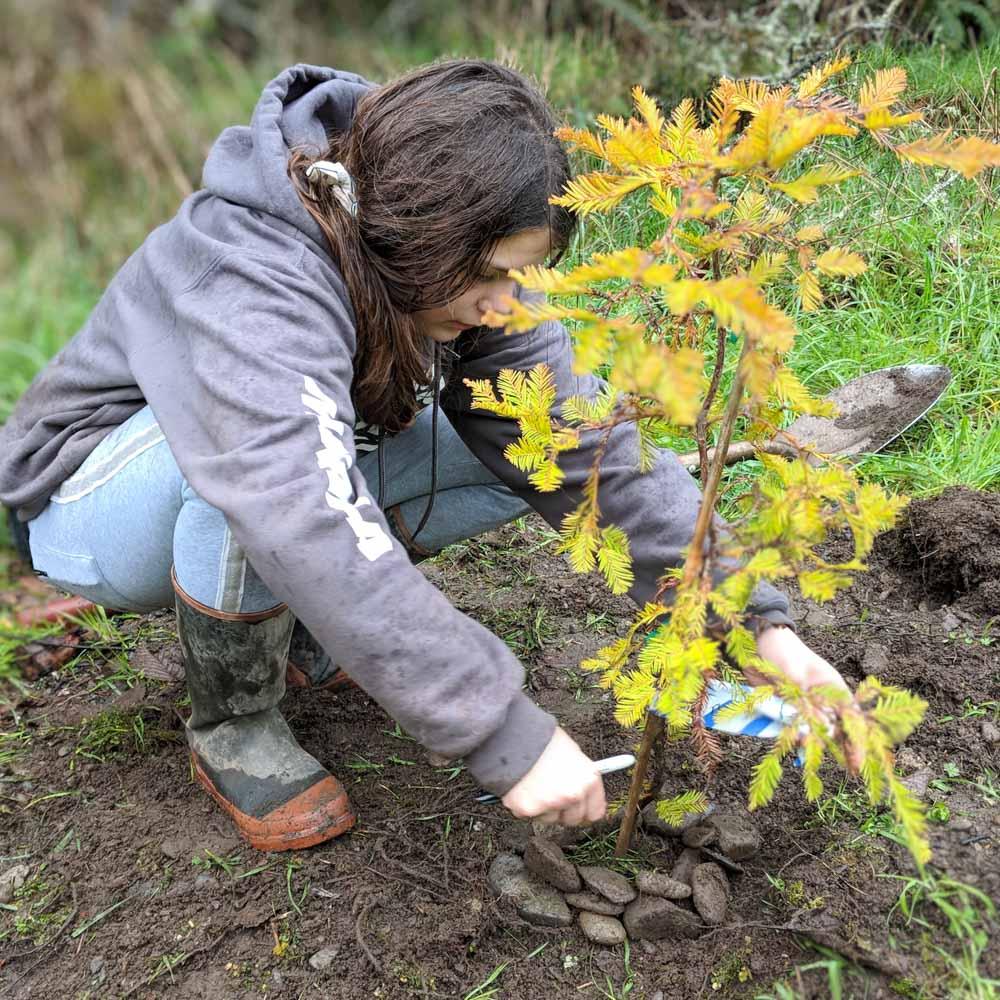 Tree-Planting-WEB-cwp-website-2