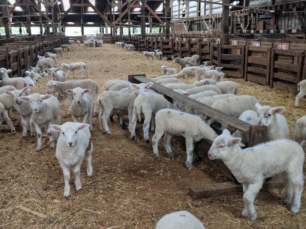 inside barn at farm
